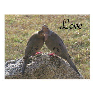 Mourning Doves birds Love Postcards