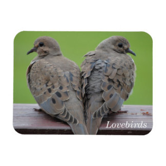 Mourning Doves Rectangular Photo Magnet
