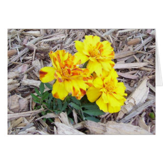 Mourning Marigolds Greeting Card