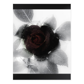 Mourning Memory Rose Post Card
