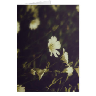 Mouse-ear Chickweed Greeting Card