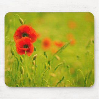 Mouse mat, Spring and flowers of poppy Mouse Pad