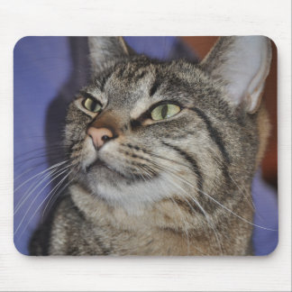 Mouse Pad -Furry Friend- Gray Tiger Stripe Cat