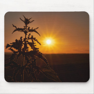 Mouse pad with a beautiful sunset und a thistle