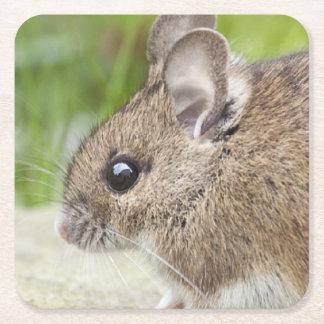 Mouse Profile Square Paper Coaster