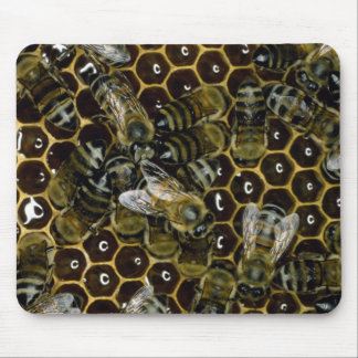 Mousepad - bees on comb