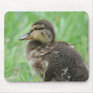Mousepad duck chicken Duckling - photo: JL Glineur