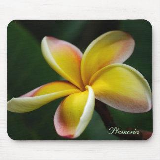 Mousepad: Plumeria #3 Mouse Pad