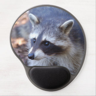 Mousepad raccoon - photo Jean Louis Glineur
