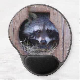 Mousepad raccoon/Racoon - photo Jean Louis Glineur