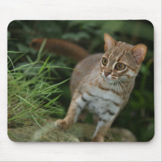 Mousepad - Rusty spotted cat