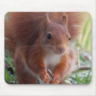Mousepad Squirrel squirrel Écureuil