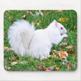 Mousepad - White Squirrel
