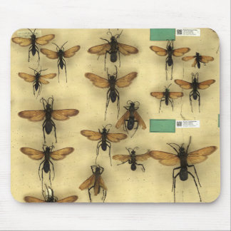 Mousepad with giant spider huntings wasps