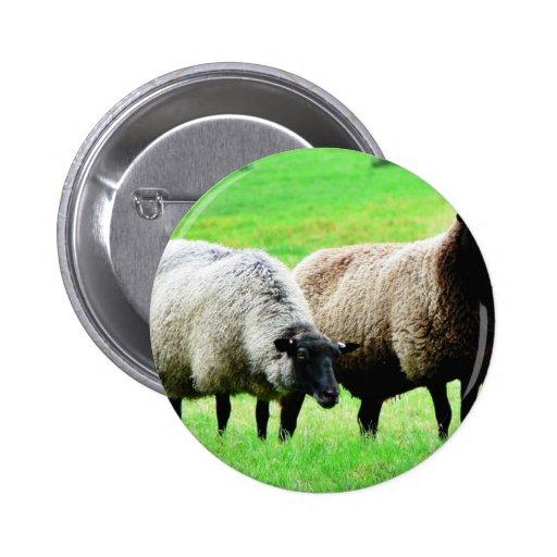 Moutons à tête noire badge