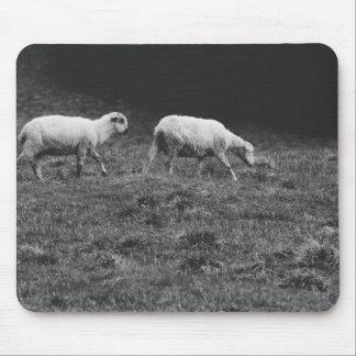 Moutons noirs et blancs dans une photo de pâturage tapis de souris