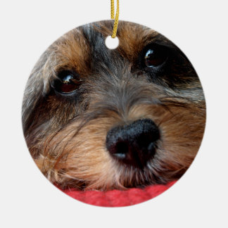 Moxi Clean as a Whistle Shorkie Ornament