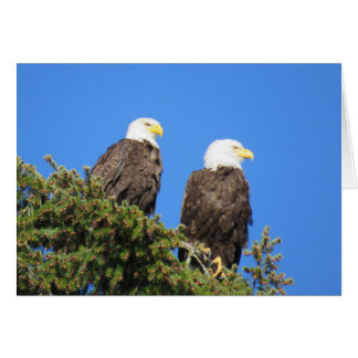 Mr and Mrs Eagle Card