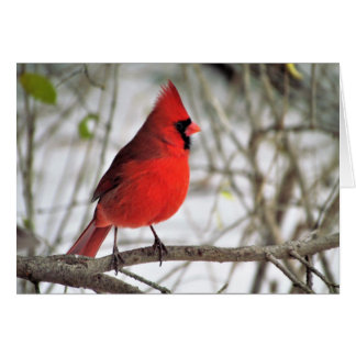 Mr. Cardinal from my window Card
