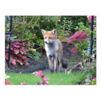 Mr Fox Postcard