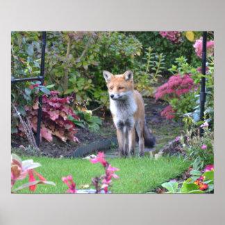 Mr Fox Poster