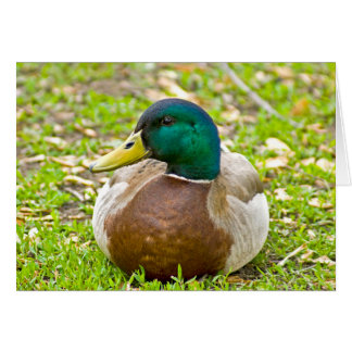 Mr. Mallard the Duck Card