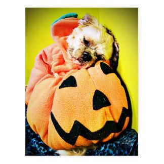 Mr. Puppy Pumpkin Postcard
