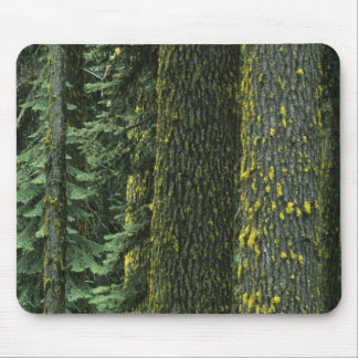 Mt. Ashland, Rogue RIver National Forest, Mouse Pad