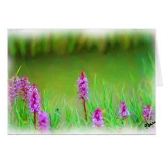 MT EVANS WILDFLOWERS CARD