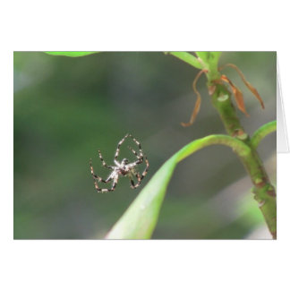 Mt Jefferson Oregon Insects Arachnids Spiders Bug Card