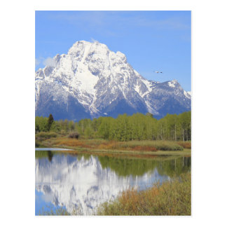Mt. Moran Grand Teton National Park Postcard