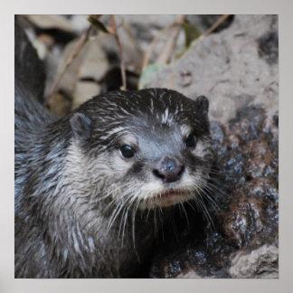 Muddy Otter Poster
