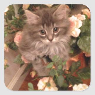 Muffen Kitten Square Sticker
