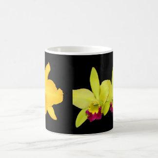 MUG, Cattyleyas, two varieties Magic Mug