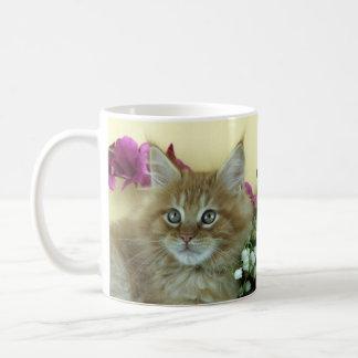 Mug Maine Coon kitten