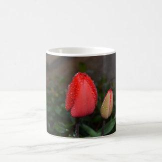 Mug Tulips under the dew