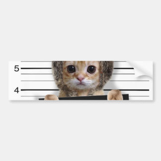 mugshot cat - crazy cat - kitty - feline bumper sticker