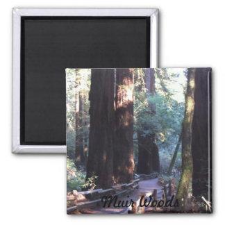 Muir Woods Magnet
