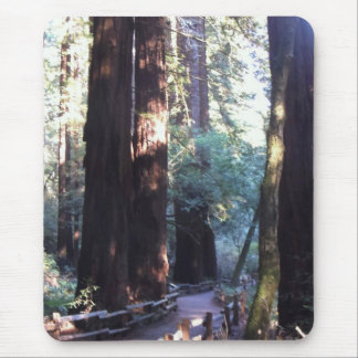 Muir Woods Mouse Pad
