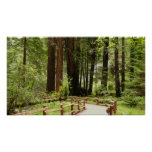 Muir Woods Path I Poster