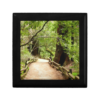 Muir Woods Path II Nature Photography Gift Box