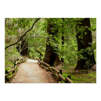 Muir Woods Path II Nature Photography Poster