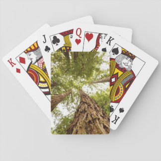 Muir Woods Playing Cards