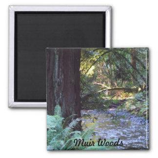 Muir Woods Stream Magnet