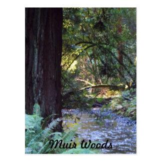 Muir Woods Stream Postcard