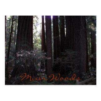 Muir Woods Travel Postcard