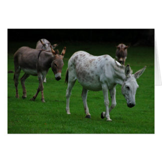 Mule and donkey greeting card