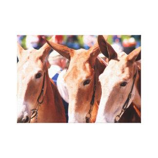 mule days in columbia tn canvas print
