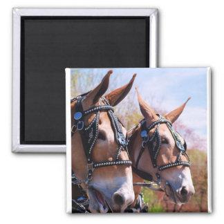 mule days magnet