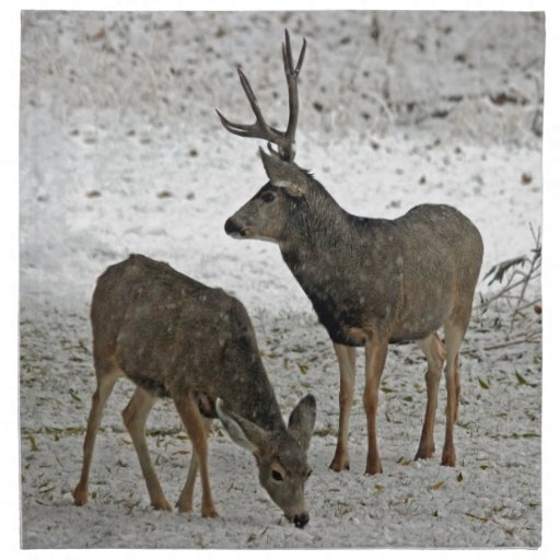 Mule deer buck and doe printed napkin